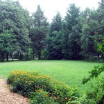Large front yard, privately landscaped in neighborhood