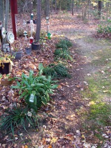 Garden right seen from the yard (where is is actually the left).  Also planted this japonica that I've had in a pot since June.