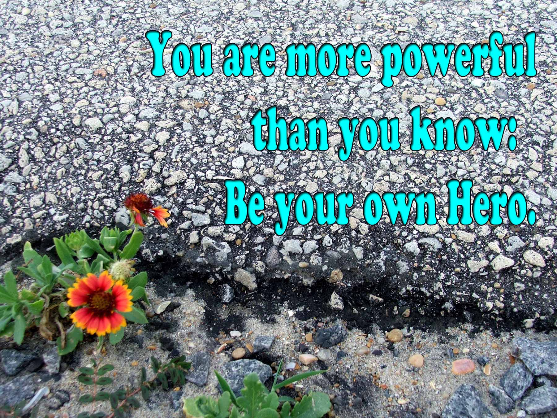 Photo of flower at the edge of asphalt. Photo and quote by Tammy Vitale